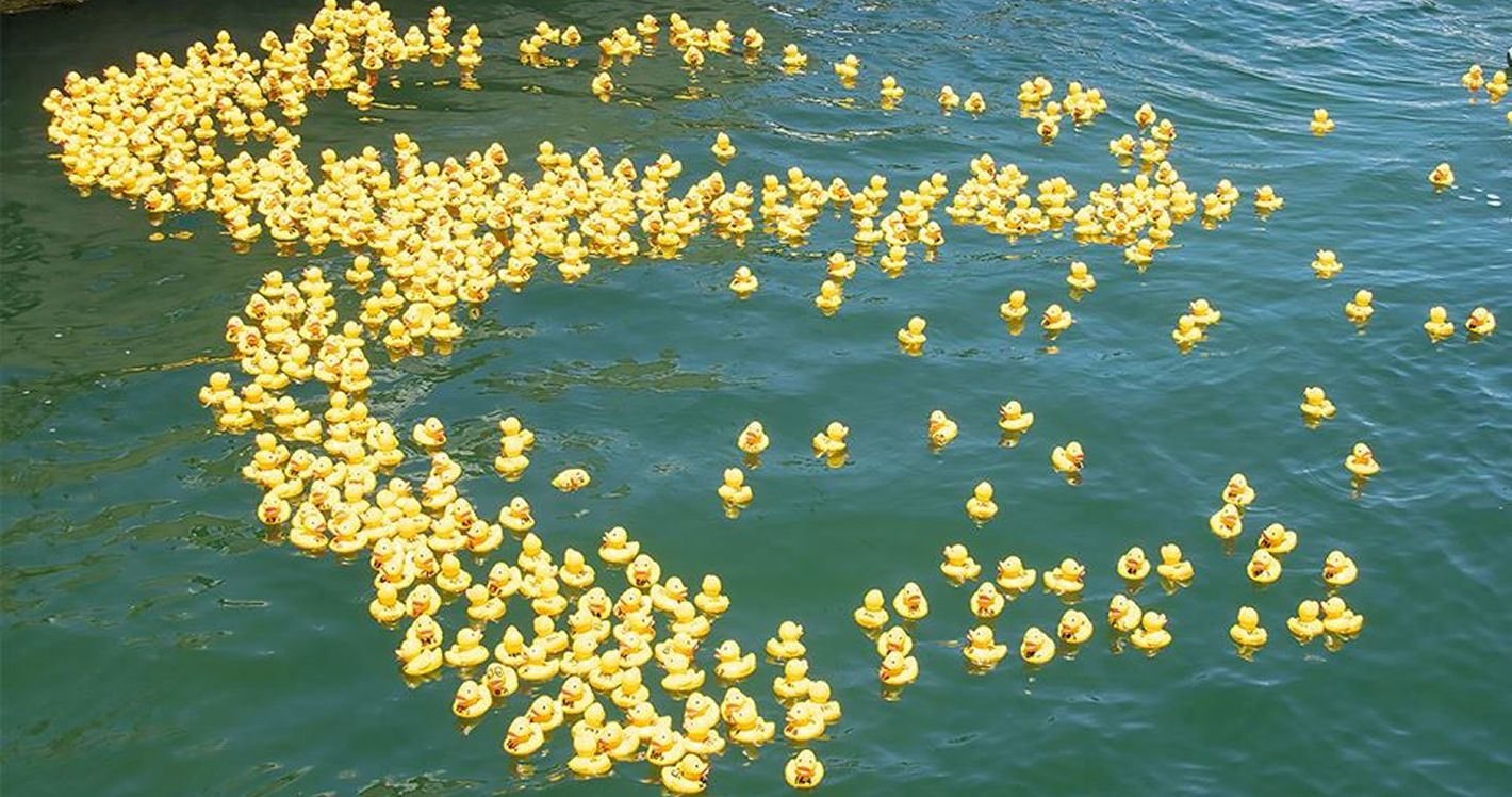 Knysna Splash Duck Race